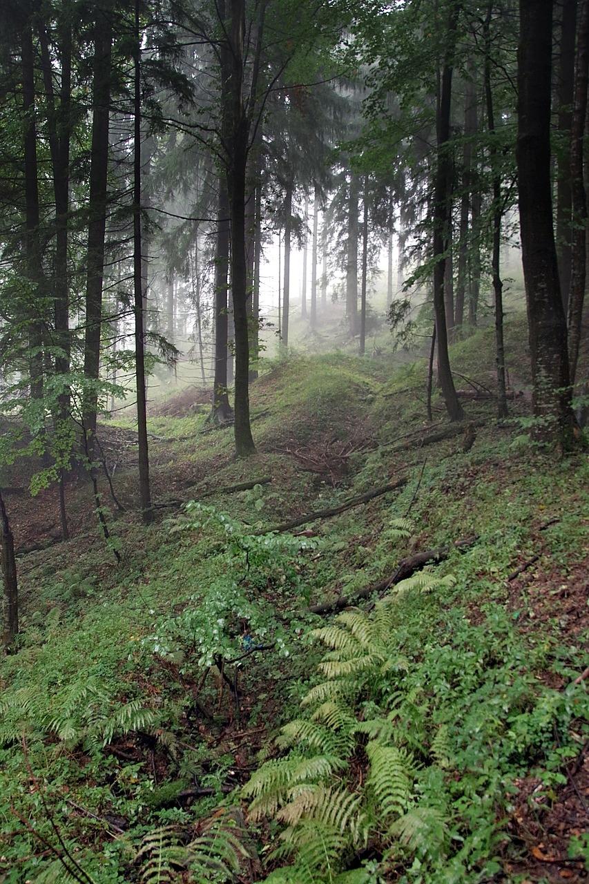雨の森の道